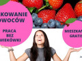 praca-produkcyjna-przy-owocach-bez-stawek-wiekowych-venlo-lub-eindhoven-small-0