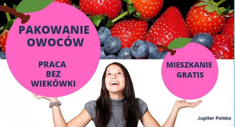 praca-produkcyjna-przy-owocach-bez-stawek-wiekowych-venlo-lub-eindhoven-big-0