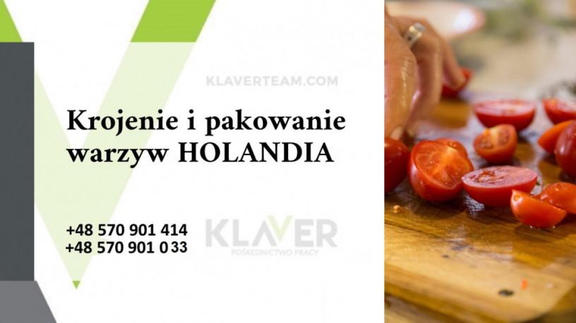 praca-przy-pakowaniu-owocow-i-warzyw-w-holandii-bez-kwarantanny-big-0