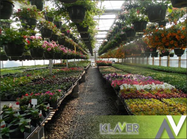 praca-w-holandii-przy-kwiatach-od-zaraz-big-0