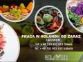 praca-przy-warzywach-i-owocach-w-holandii-od-zaraz-small-0