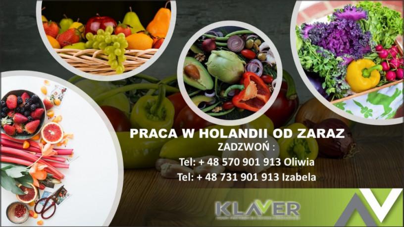 praca-przy-warzywach-i-owocach-w-holandii-od-zaraz-big-0