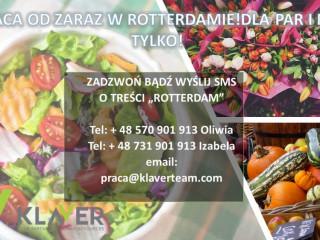 Praca w Holandii od zaraz sortownie owoców i warzyw- sałatki okolice Rotterdamu !!!