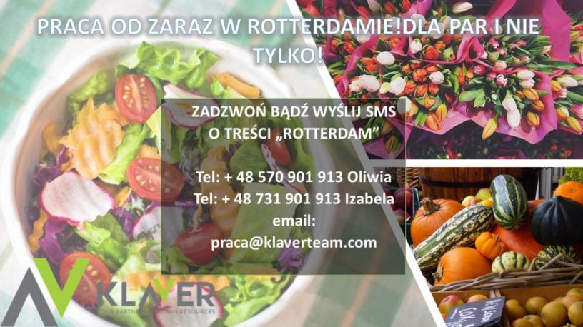praca-w-holandii-od-zaraz-sortownie-owocow-i-warzyw-salatki-okolice-rotterdamu-big-0