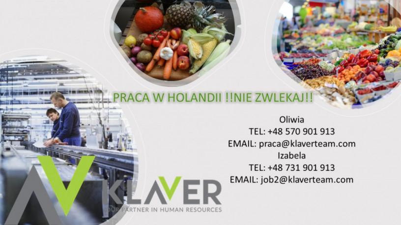 praca-w-holandii-rotterdam-od-zaraz-produkcja-kwiaty-big-0