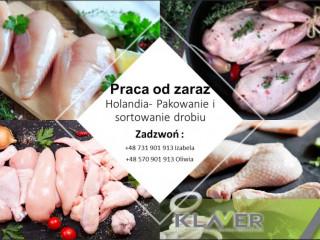 Prace produkcyjne przy mięsie w Holandii