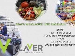 Praca w Holandii od zaraz Den Haag produkcja!