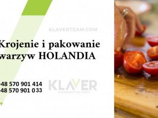 Produkcja sałatek, krojenie i pakownie warzyw  - Holandia !!