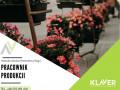 pracownik-sektora-ogrodniczego-sadzenie-ciecie-i-pielegnacja-kwiatow-small-0
