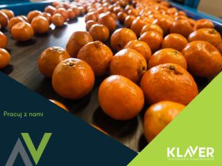 Praca przy pakowaniu owoców i warzyw w Holandii !!! bez kwarantanny