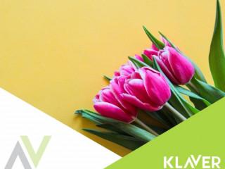 Czyszczenie cebulek kwiatowych - PRACA OD ZARAZ- Holandia