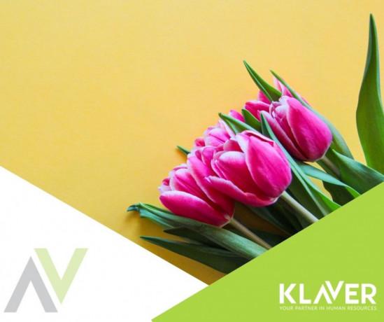 czyszczenie-cebulek-kwiatowych-praca-od-zaraz-holandia-big-0