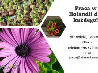 Praca w Holandii na produkcji atrakcyjne warunki