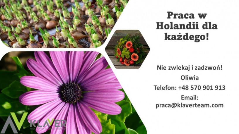 praca-w-holandii-na-produkcji-atrakcyjne-warunki-big-0