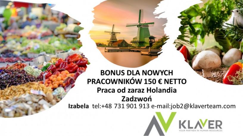 praca-od-zaraz-holandia-bonus-dla-nowych-pracownikowsortowanie-owocow-big-0