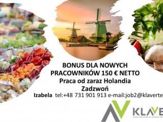 Praca od zaraz Holandia -produkcja Bonus 150 € dla nowych pracowników na start