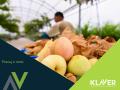 praca-w-holandii-pakowanie-warzyw-i-owocow-bez-jezyka-od-zaraz-small-0
