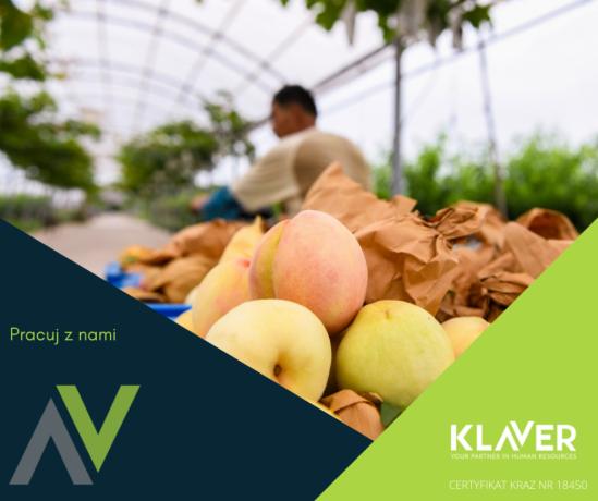 praca-w-holandii-pakowanie-warzyw-i-owocow-bez-jezyka-od-zaraz-big-0