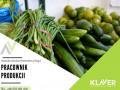 sortowanie-owocow-i-warzyw-bez-doswiadczenia-w-holandii-small-0