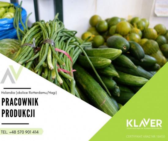 sortowanie-owocow-i-warzyw-bez-doswiadczenia-w-holandii-big-0