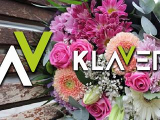 Praca od zaraz przy kwiatach w Holandii- sadzonki, kwiaty doniczkowe i cięte